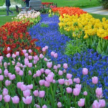 V Фестиваль тюльпанов в Санкт-Петербурге