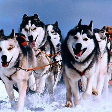 Гонки на собачьих упряжках «Русский Север – 2018»