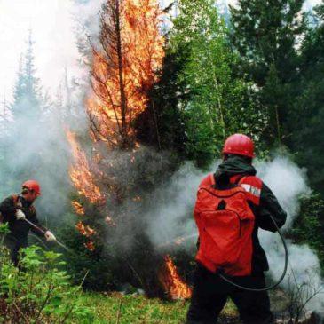 Запрет на посещение леса в Лужском районе с 1 июня 2018 года